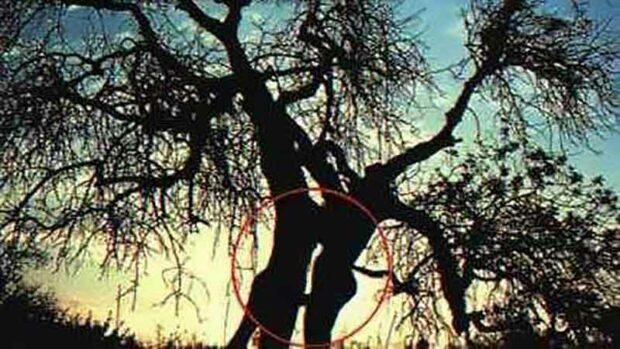 Tree Sex