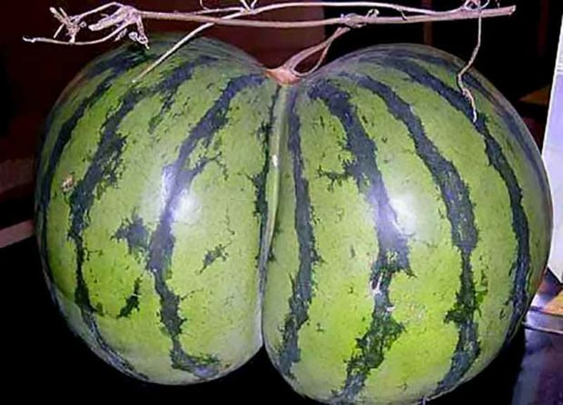 Plant Porn: Watermelon Butt