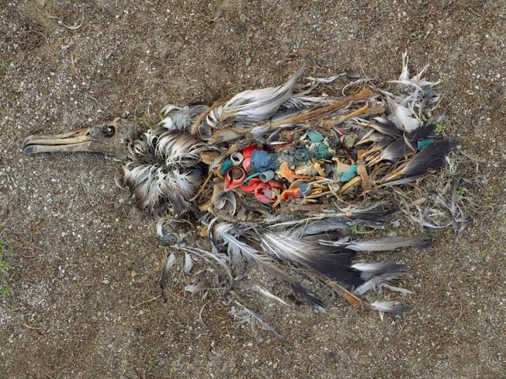Pollution-Bird-Plastic-Diet