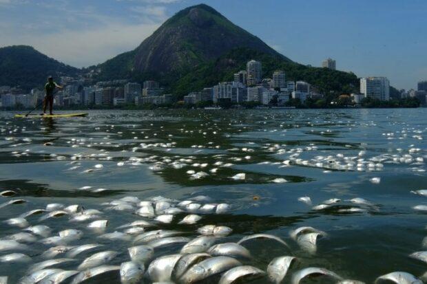 Pollution-Dead-Fish-City