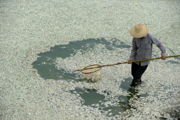 Pollution-Fish-Dead
