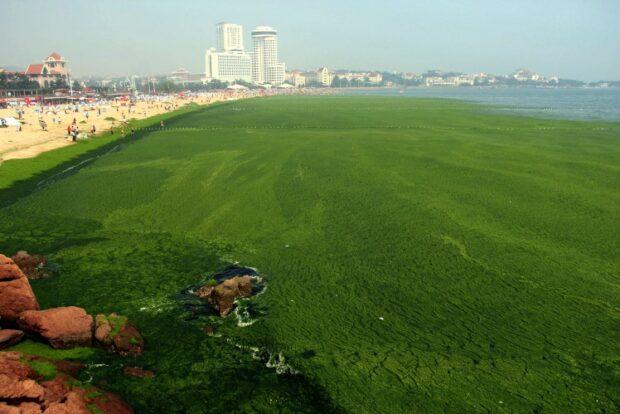 Pollution-Green-Algae