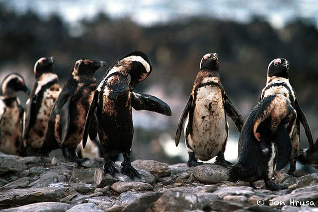 Pollution-Penguins-Oil