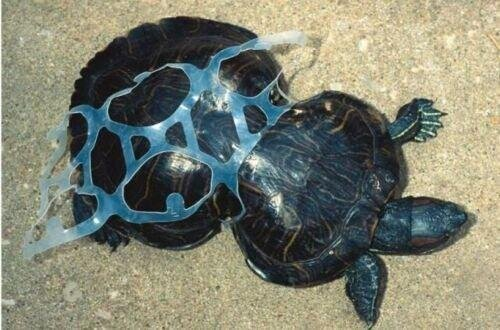 Pollution-Turtle-Plastic1