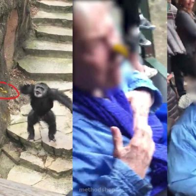 Monkey Perfects Poop Toss on Innocent Grandma's Face