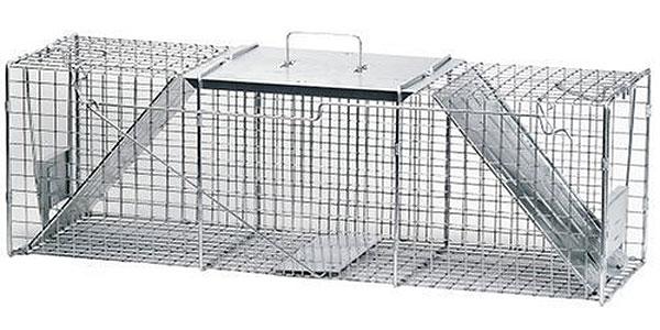 racoon-2door-trap