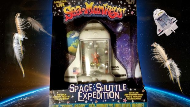Sea-Monkeys Have Been To Outer Space: During One Of John Glenn'S Space Shuttle Discovery Missions, About 400 Million Sea-Monkeys Accompanied The Crew On Their Mission Into Outer Space. Nasa'S Sea-Monkey Experiment Was To Test The Effect On Animals Born In Zero Gravity. The Result? Sea-Monkey'S Actually Thrived In Outer Space. They Grew Bigger And Faster Without Gravity.