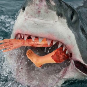 9 Ways To Increase Your Odds Of A Shark Attack
