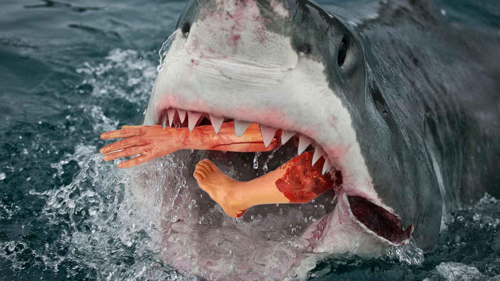 Shark Attack Myrtle Beach