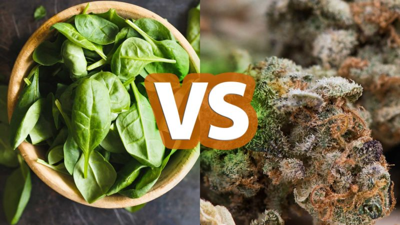 Spinach vs Marijuana: Which One Is More Likely To Kill You?