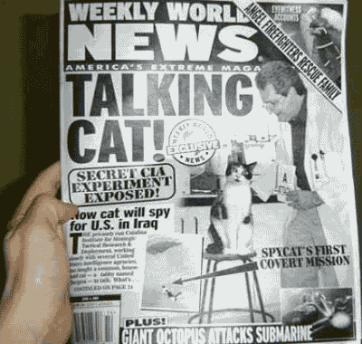 Talking Cats - Crazy Tabloid Headlines About Cats