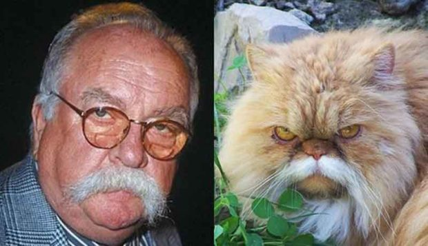 Wilford Brimley Cat Photos - Cats Who Look Like Wilford Brimley