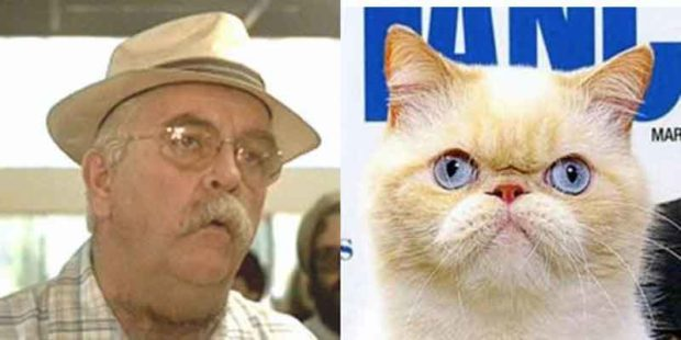 Wilford Brimley Cat Photos - Wilford Brimley Looks Like A Cat