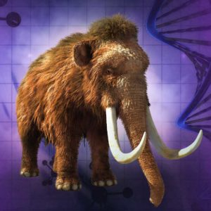 Should Scientists Create A Woolly Mammoth Clone?