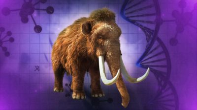 Bringing Back The Woolly Mammoth - Should Scientists Clone The Mammoth?